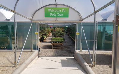 The Poly Two