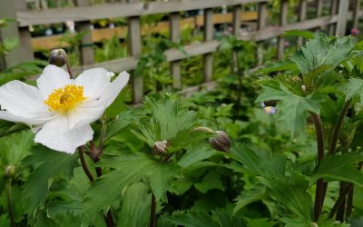 Root One favourites for a shady border