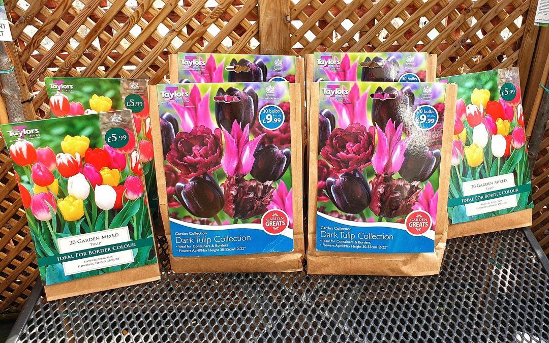Our Top Five Bulbs for Guaranteed Spring Colour